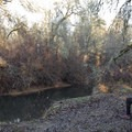 There are many benches next to the river.- Fern Ridge Wildlife Area, Applegate Unit