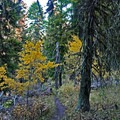 Fall foliage on the Grizzly Peak Trail.- Grizzly Peak