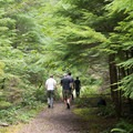 Level trail along an old forest road.- Henline Falls