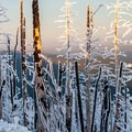 Ice gives the trees a cartoonish look.- Black Butte Hike