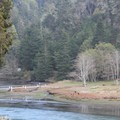 Albion River.- Albion River Campground