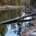 Ponderosa pines (Pinus ponderosa) and sky reflected in Fall River's tranquil headwaters.- Fall River Trail