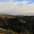 The southwestern slopes of Mount Tamalpais State Park as seen from the Dipsea Trail.- Mount Tamalpais State Park