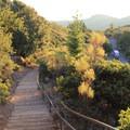 The Plankwalk Trail.- East Peak