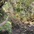 The Steep Ravine Trail follows Webb Creek along the bottom of one of Tam's west facing ravines.- Steep Ravine Trail to Dipsea Trail Loop