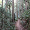 Steep Ravine Trail.- Steep Ravine Trail to Dipsea Trail Loop