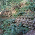 One of many bridges along the Steep Ravine Trail.- Steep Ravine Trail to Dipsea Trail Loop