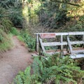 Back in Steep Ravine at the Dipsea, the Steep Ravine Trail junction.- Steep Ravine Trail to Dipsea Trail Loop