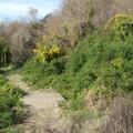 Palomarin Beach Trail.- Palomarin Beach