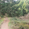The Coast Trail leaves the bluffs above the ocean and heads inland through a Douglass fir forest.- Palomarin Hike to Bass Lake