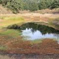 One of a handful of ponds you'll pass before reaching Bass Lake. - Palomarin Hike to Bass Lake