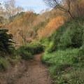 The Coast Trail.- Palomarin Hike to Bass Lake