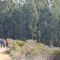 Hikers along the Coast Trail.- Palomarin Hike to Bass Lake