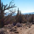 The silhouette of a dead juniper tree.- Flatiron Rock Trail