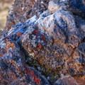 The vibrant lichen that calls these rocks home.- Flatiron Rock Trail
