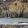 Sea caves at Stump Beach Cove.- Salt Point Trail