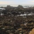 Tide pools at Gerstle Cove.- Salt Point Trail