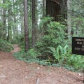 Signage marks the beginning of the 1,000-foot drop that begins immediately after the junction with the Coastal Trail.- Damnation Creek Trail