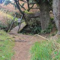 Hikers encounter two foot bridges crossing Damnation Creek before emerging on the coast.- Damnation Creek Trail