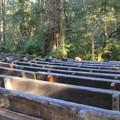 Campfire amphitheatre in Jedediah Smith Campground.- Jedediah Smith Campground