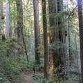 Leiffer Loop Trail.- Leiffer + Ellsworth Loop Trails