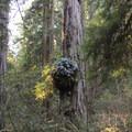 Ferns found a perch on the Leiffer Loop Trail.- Leiffer + Ellsworth Loop Trails
