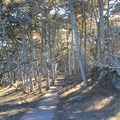 The Cypress Grove Trail in Point Lobos State Natural Reserve.- Cypress Grove Trail