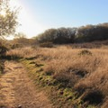 The Beach Trail in Andrew Molera State Park.- Andrew Molera State Park