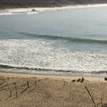 Sunbathers soaking up a warm winter day on Andrew Molera State Beach.- Andrew Molera State Beach