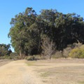 The trail passes through Trail Camp and continues to Cooper's Grove.- Headlands Trail
