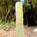 A trail spur marker along Trinidad Head Loop.- Trinidad Head Loop