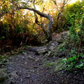 A trail spur to one of many lookouts.- Trinidad Head Loop