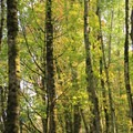 Riparian forest in Nisqually National Wildlife Refuge.- Billy Frank Jr. Nisqually National Wildlife Refuge