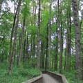 Boardwalk through a riparian forest in Nisqually National Wildlife Refuge.- Billy Frank Jr. Nisqually National Wildlife Refuge