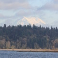 Mount Rainier (14,411') in the distance. - Billy Frank Jr. Nisqually National Wildlife Refuge