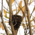 Bird's nest by the visitor center. - Billy Frank Jr. Nisqually National Wildlife Refuge