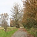 Service road to the Twin Barns.- Billy Frank Jr. Nisqually National Wildlife Refuge