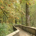 Twin Barns Loop boardwalk.- Billy Frank Jr. Nisqually National Wildlife Refuge