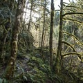 Lush wilderness all along the hike.- Clackamas + Memaloose Falls