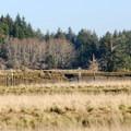 John's River State Wildlife Area.- John's River State Wildlife Area