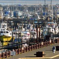Westport Marina.- Port of Grays Harbor Observation Tower