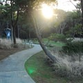 Grayland Beach State Park Campground.- Grayland Beach State Park Campground