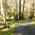 Eastside campsites in Twin Harbors State Park Campground.- Twin Harbors State Park
