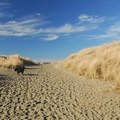 Beach access in Twin Harbors State Park.- Twin Harbors State Park Campground