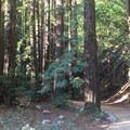 Pfeiffer Big Sur State Park.- Pfeiffer Big Sur State Park