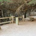 The access trail to Pfeiffer Beach.- Pfeiffer Beach