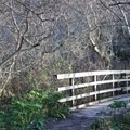 One of two bridges along the way.- Palomarin Hike to Alamere Falls