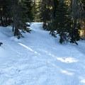 Nisqually Vista Snowshoe Trail.- Nisqually Vista Snowshoe Trail