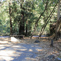 Typical forest site.- Pfeiffer Big Sur State Park Campground