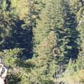 A lone turkey vulture (Cathartes aura).- Valley View + Pfeiffer Falls Trail Hike
